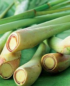 Sereh (Lemon Grass)