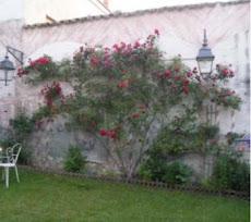 Genevieve's Jardin