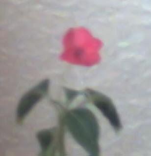 Flor capturada con la webcam de la katana (2MPx)