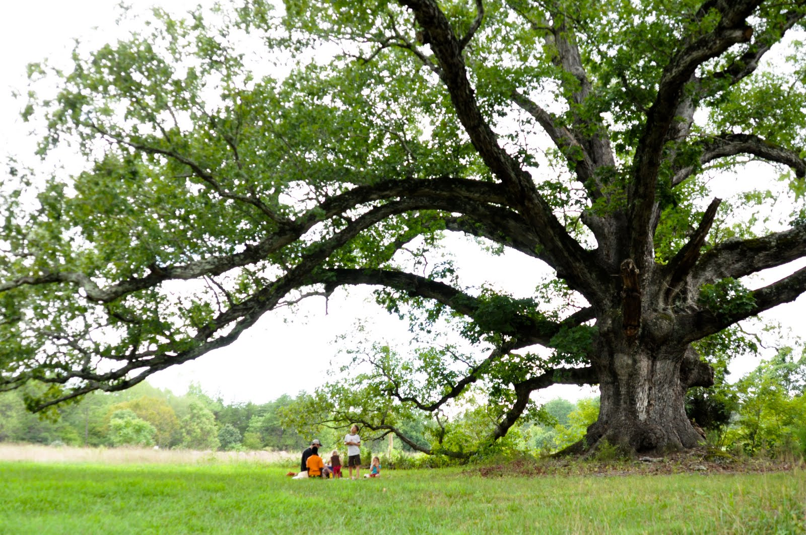 Remarkable trees adventure cumberland county white oak