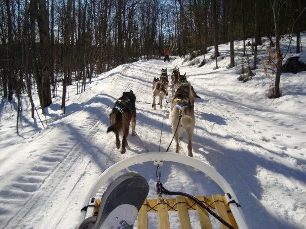 Howliday Inn Dog Boarding Kennel