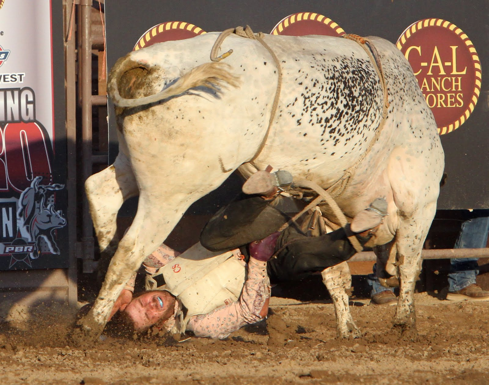 http://netmoser.blogspot.com/2010/07/pbr-bull-riding.html netmoser.blogspot.