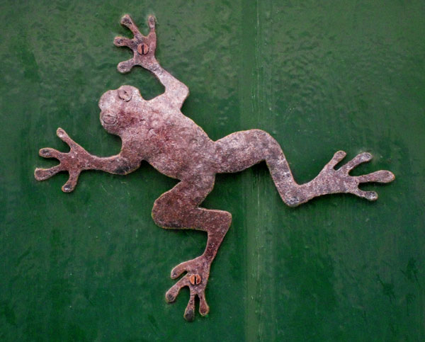 [ironfrog.jpg]