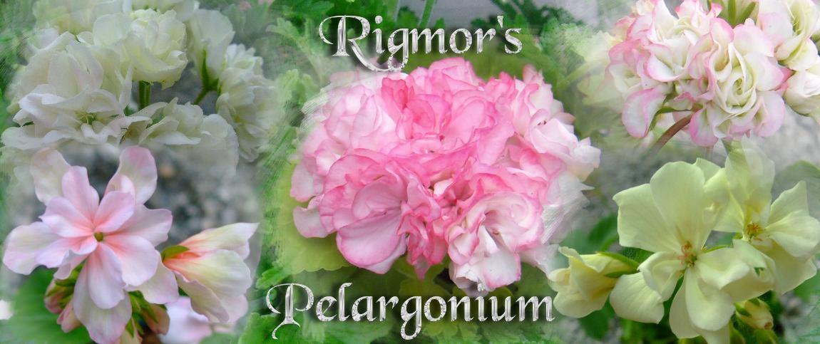 Rigmor's Pelargonium
