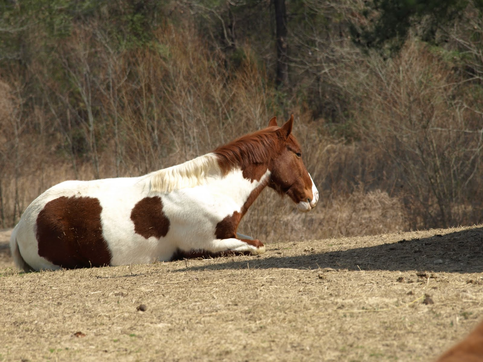 Sleeping Horse Sleeping horses