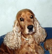 Min älskade hund Snobben