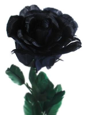 wallpaper black rose. Wallpaper World: Black Roses