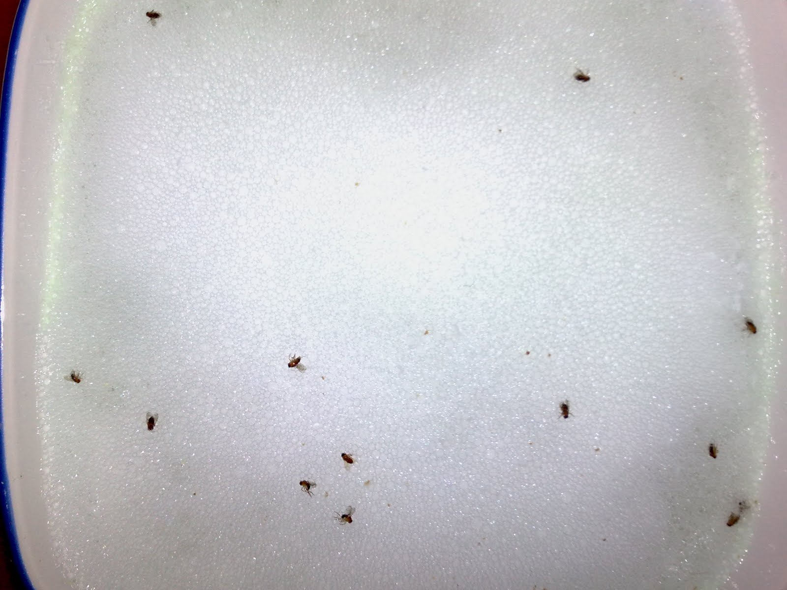 Drain Gnats Pictures to Pin on Pinterest - ThePinsta