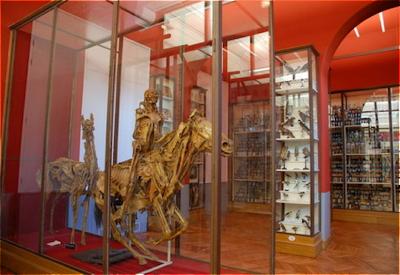 Dittrick museum a curator s paris journal mus e de l for Adresse ecole veterinaire maison alfort