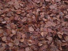 il mio autunno è zenzero e cannella sotto un cielo di stelline e tempestina nel brodo della nonna*