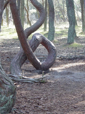 Weird dancing forest