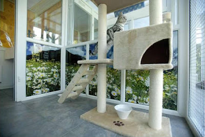cat Luxury hotel