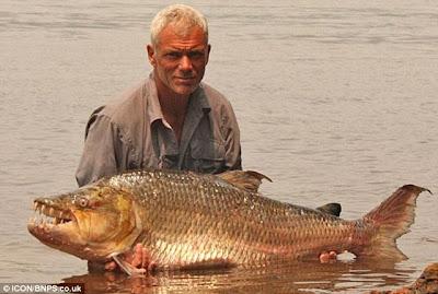 large piranha