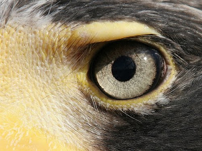 best eye vision