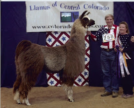 Tempis Fugit - RIP you Stud Muffin - you were the most handsome llama ever!