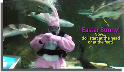 Easter Bunny and the sharks