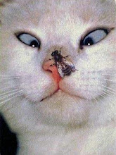 cat with fly on nose