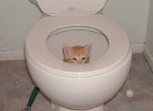 Kitty in toilet