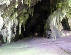 La Cueva del Guacharo