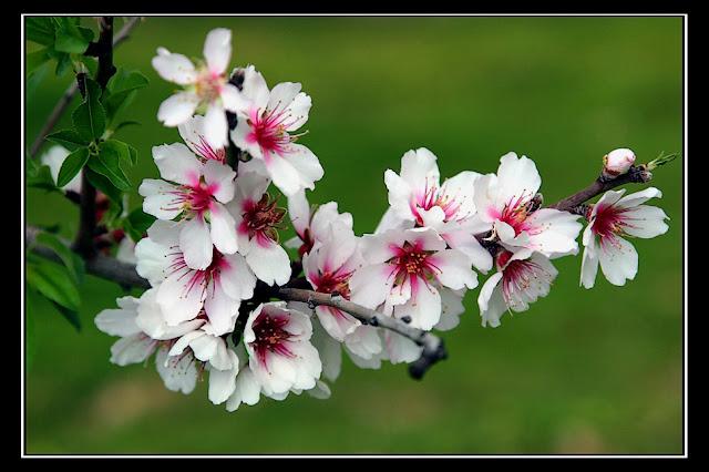 http://1.bp.blogspot.com/_B_zVrZltBXg/S8w62mJQSeI/AAAAAAAAACY/zE3Hk2E6E9I/s1600/primavera.jpg