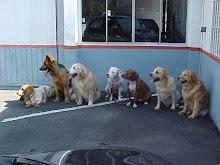 Diana e seus amigos