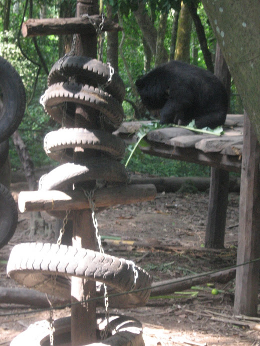 Black Bears in Laos