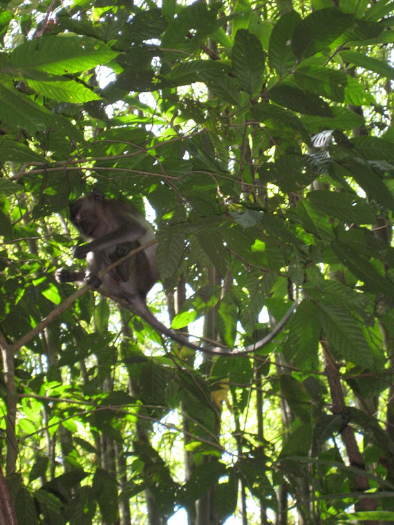 The monkeys in Khao Sok