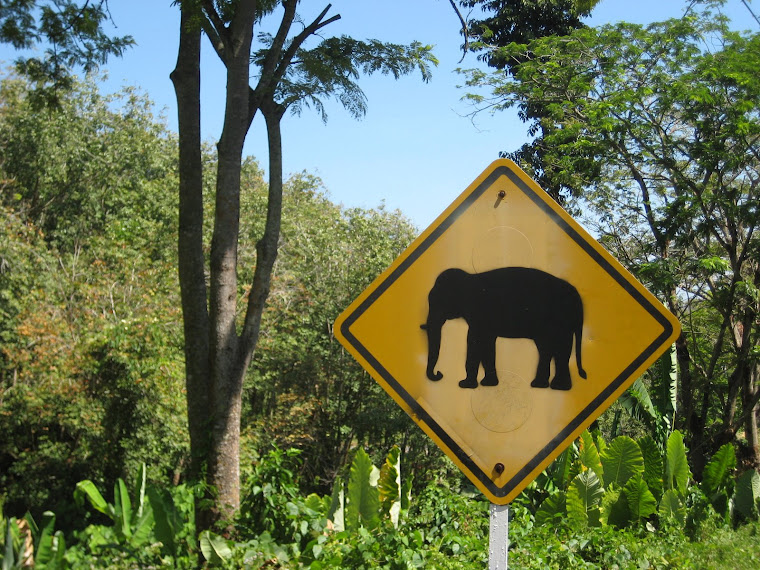 Elephants crossing!