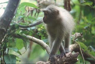 world monkey photos sanje mangabey monkey found in africa in tanzania