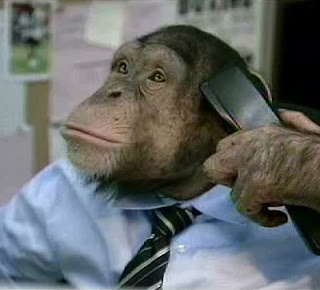 funny and crazy animal photos chimp at work in suit