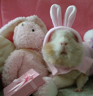 funny crazy animals photo of real easter bunny with pink bonnet and new ears