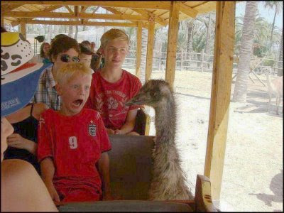 reaaly funny photo of emu scaring tourist kid in Australia
