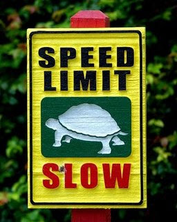 funny signs of turtle going slow pic
