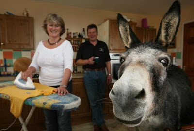 funny donkey photos inside the house smiling for the camera