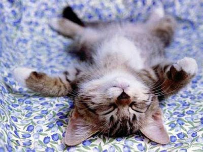 funny really cute tabby kitten cat sleeping upside down photo