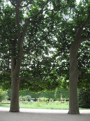paris photos trees and gardens jardin des plantes just perfect relaxing and peaceful