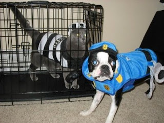 funny dogs and cats playing dress ups as criminal and police