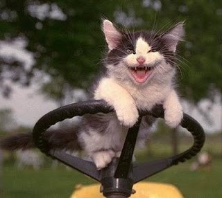 funny kitten photo driving a tractor and looking angry