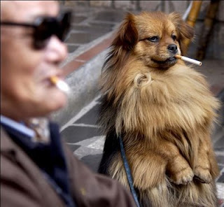 funny photo of dog smoking a cigarette