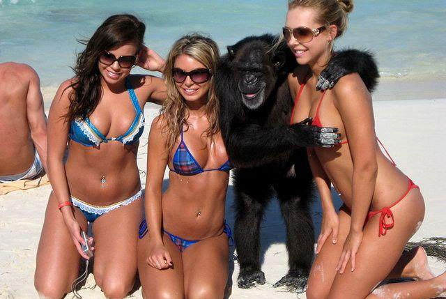 funny-chimp-on-beach.jpg