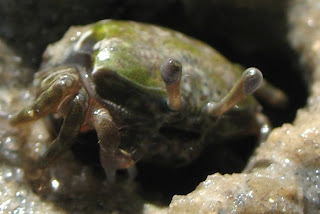 Macro photo of a little crab