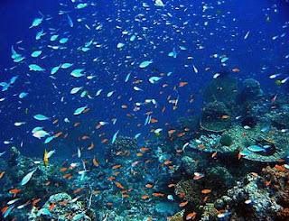 Similan Island reef