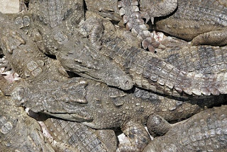 Phuket Crocodile Farm