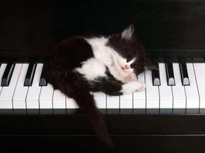 Cat in Piano