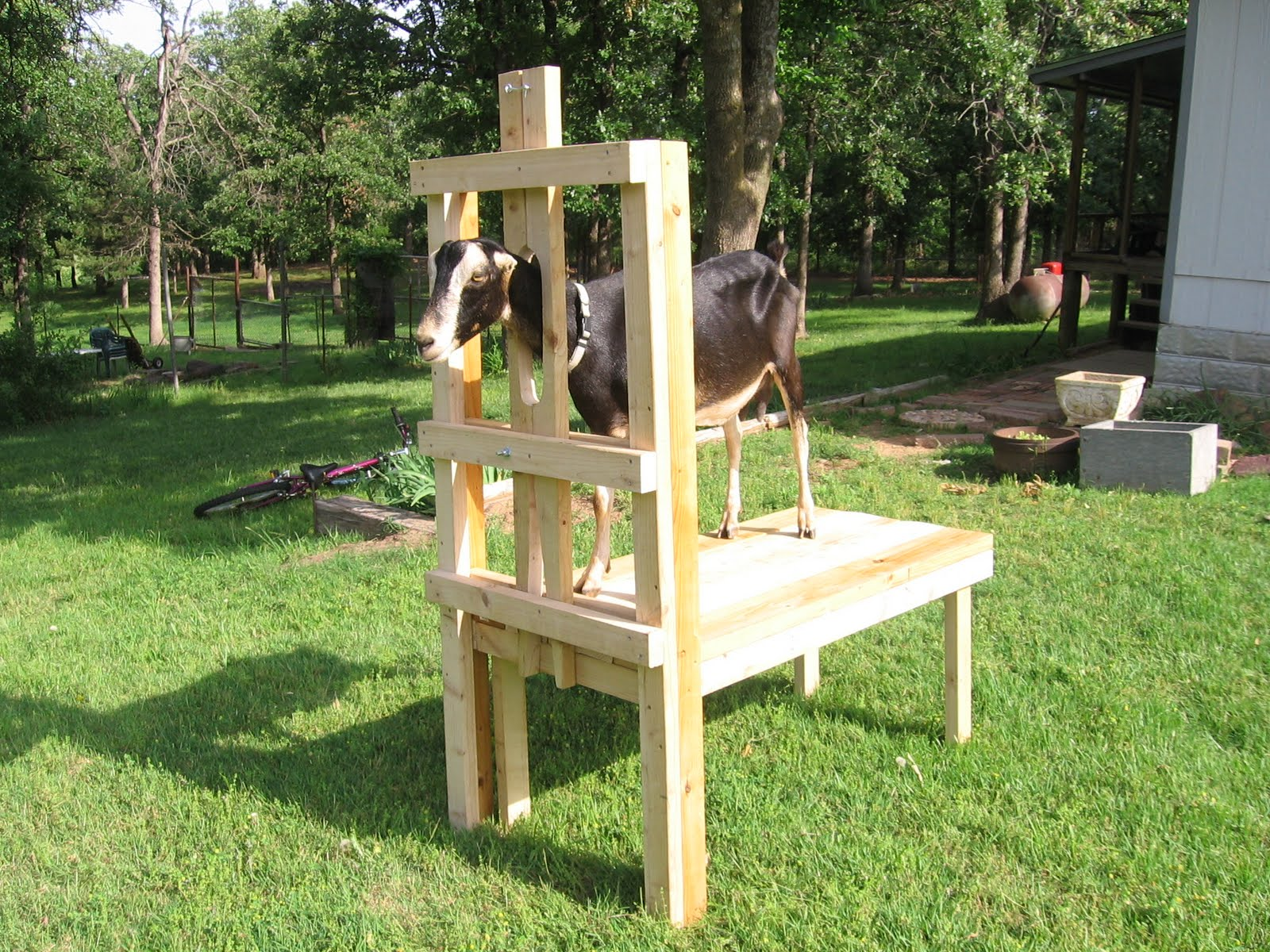 goats for world plans the feeder goat hay survival challenged in best pin