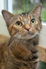 Sabrina Was Adopted 3/22