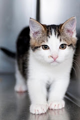 We Have Lots of Cats Available For Adoption Right Now at JCAnimal Shelter 385-3292
