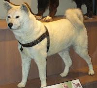 dog-best-friend-1.jpg