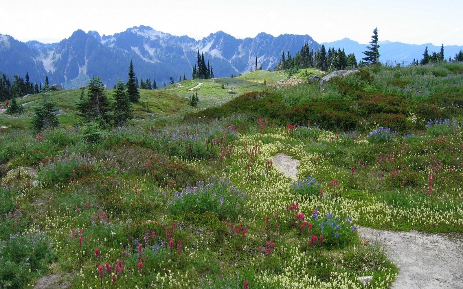 http://1.bp.blogspot.com/_BhRumUqjdYg/TUepoA3JG7I/AAAAAAAAAQ8/AdpGcDPEjvE/s1600/alps-mountains-spring-season-flowers-cool-pictures-+wallpapers.jpg