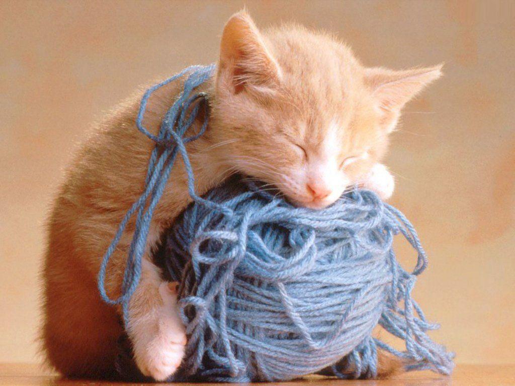 http://1.bp.blogspot.com/_BhTZERbxx54/TBJnCfzvxqI/AAAAAAAAADc/lvin-C7Q6-U/s1600/cat+desktop-wallpaper.jpg